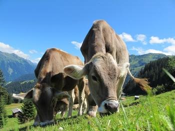 Nachhaltige Tierhaltung