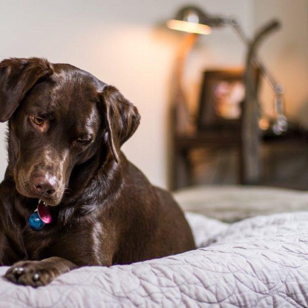 Hundefreundlich in München: Worauf vierbeinige Hoteltester achten