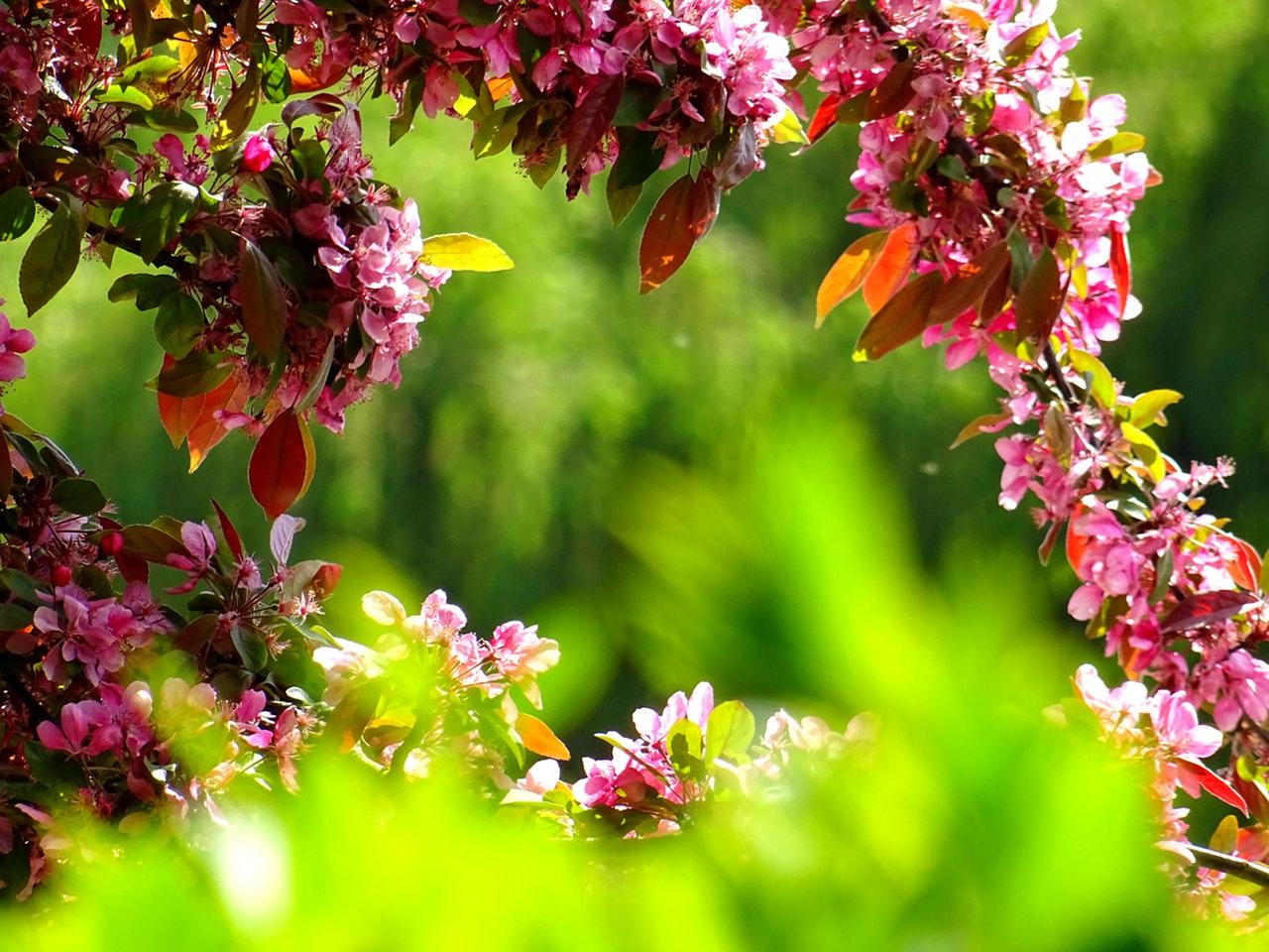 Der Botanische Garten München Nicht Nur Für Gartenfreunde Erb Hotels