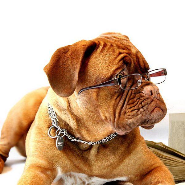 Wie ein Bürohund das Betriebsklima verbessert