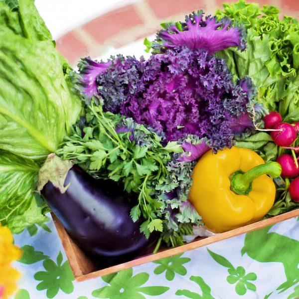 Eigenanbau von Gemüse  – auch in der Stadt!